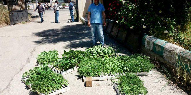توزيع 400 منحة زراعية على عدد من الأسر بالقنيطرة
