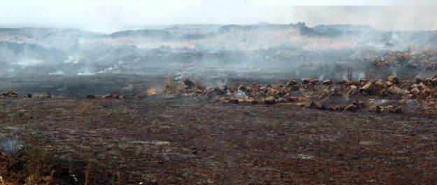 إخماد حريق كبير قرب سد الروم بالسويداء