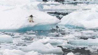 ارتفاع غير مسبوق في درجة حرارة القارة القطبية الجنوبية