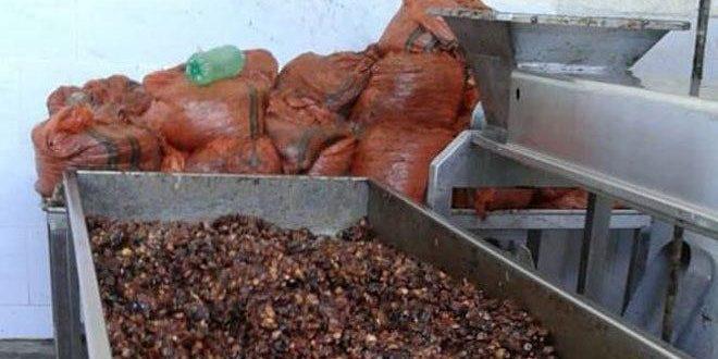 إغلاق معمل حلويات في ريف دمشق يحتوي (طناً) من العجوة منتهية الصلاحية