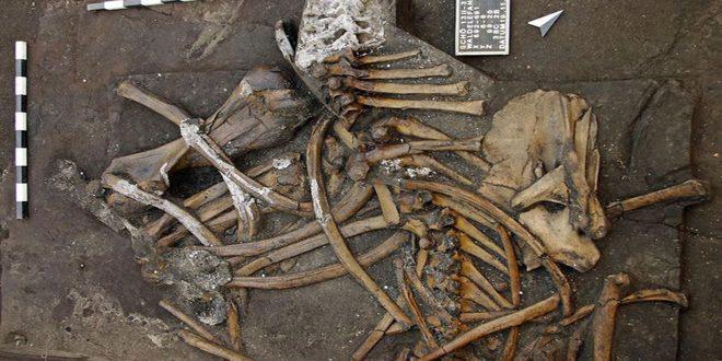 ألمانيا.. العثور على هيكل عظمي لفيل عمره 300 ألف سنة