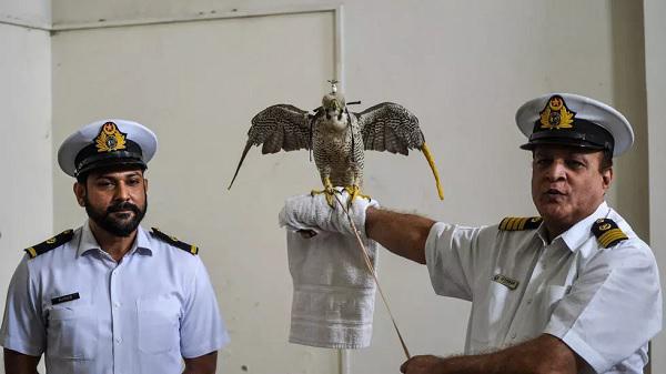 باكستان تحبط محاولة تهريب عشرات الصقور المهددة بالانقراض