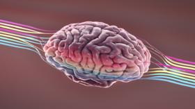 علماء الأعصاب يتتبعون