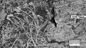 اكتشاف أقدم نباتات أحفورية في إفريقيا