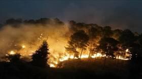 المغرب يعلن السيطرة على حريق غابات شفشاون (فيديو)