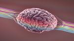 """علماء الأعصاب يتتبعون """"حركة فكرة"""" أثناء انتقالها عبر دماغ الإنسان!"""