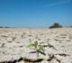 """""""ارتفاع غير مسبوق"""" في درجات الحرارة خلال السنوات العشر الأخيرة"""