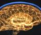 غوغل وعلماء هارفارد يجمعون 225 مليون صورة لإنشاء أكثر الخرائط ثلاثية الأبعاد تفصيلا للدماغ البشري!